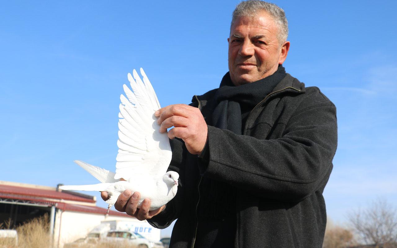 Sivas'ta bu kuşlara fiyat biçilemiyor! Müdürlüğü bırakıp başladı dünyaya satıyor
