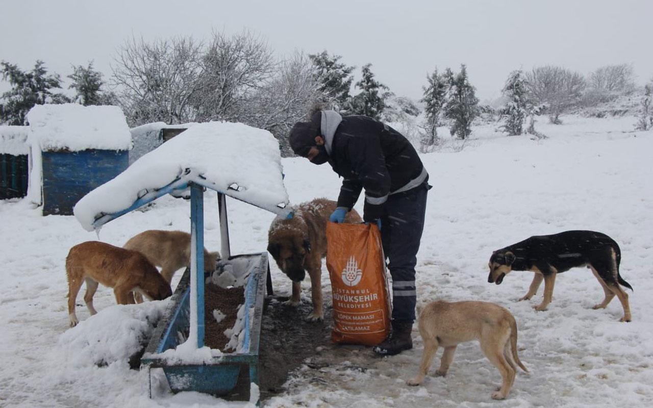 Ekrem İmamoğlu'ndan karlı günlerde sokak hayvanları paylaşımı geldi!