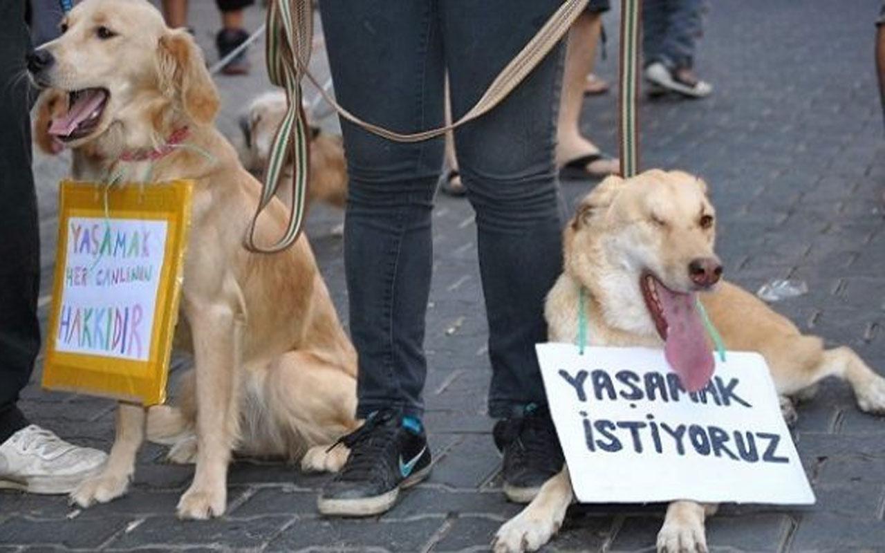 AK Parti'li Akbaşoğlu açıkladı: Hayvan haklarını önümüzdeki haftalarda yasalaştıracağız