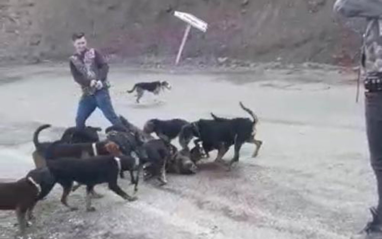 Avcılar vurarak yaraladıkları yavru domuzu köpeklere parçalattı