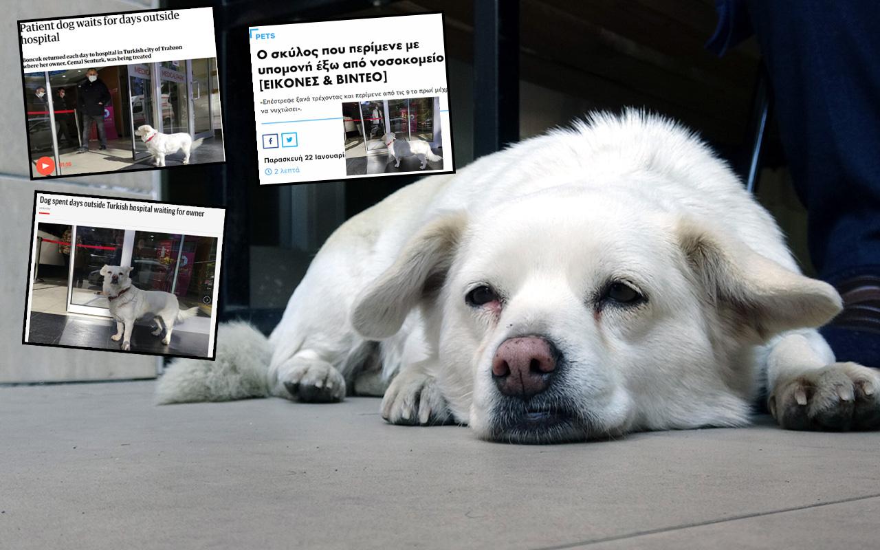 Dünya Trabzon'daki bu köpeği konuşuyor! Gazeteler manşetten duyurdu