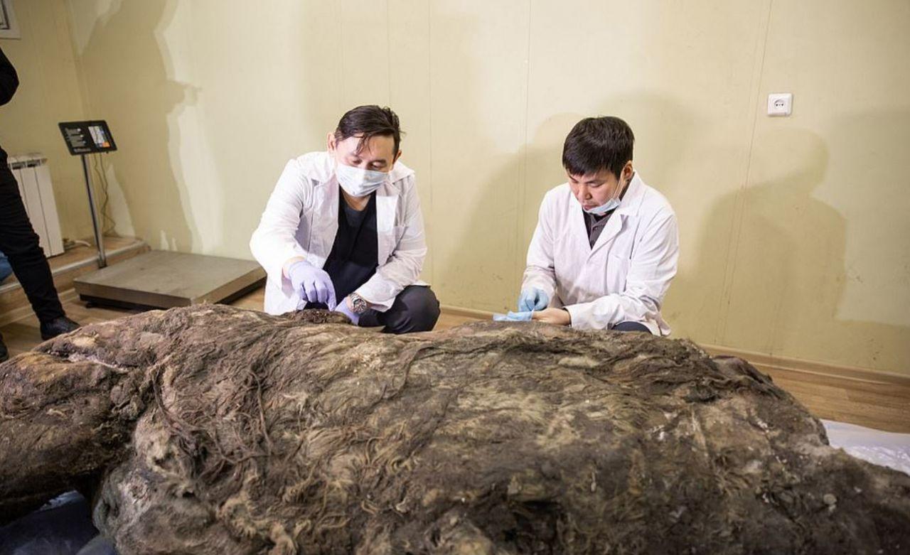 Sibirya'da keşfedildi 40 bin yıldır buzulda korunmuş tüyleri bile üzerinde