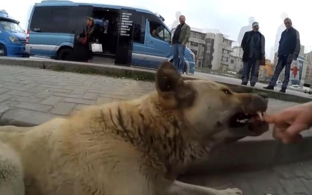 Maltepe'de sokak köpeklerine kendini ısırtan adam! Nedeni bakın neymiş