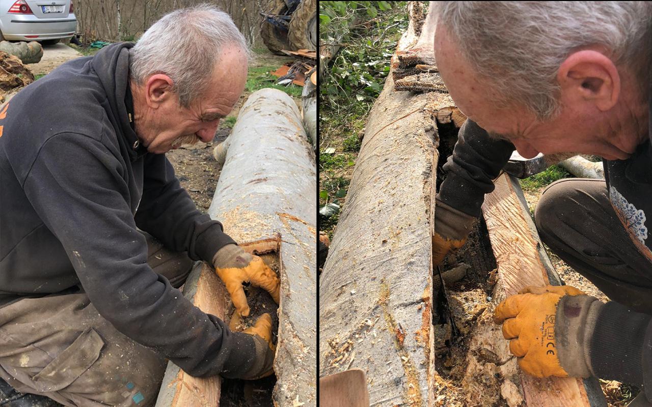 Sakarya'da çürümüş ağaçta buldu: Böylesini ancak belgeselde izlerdim