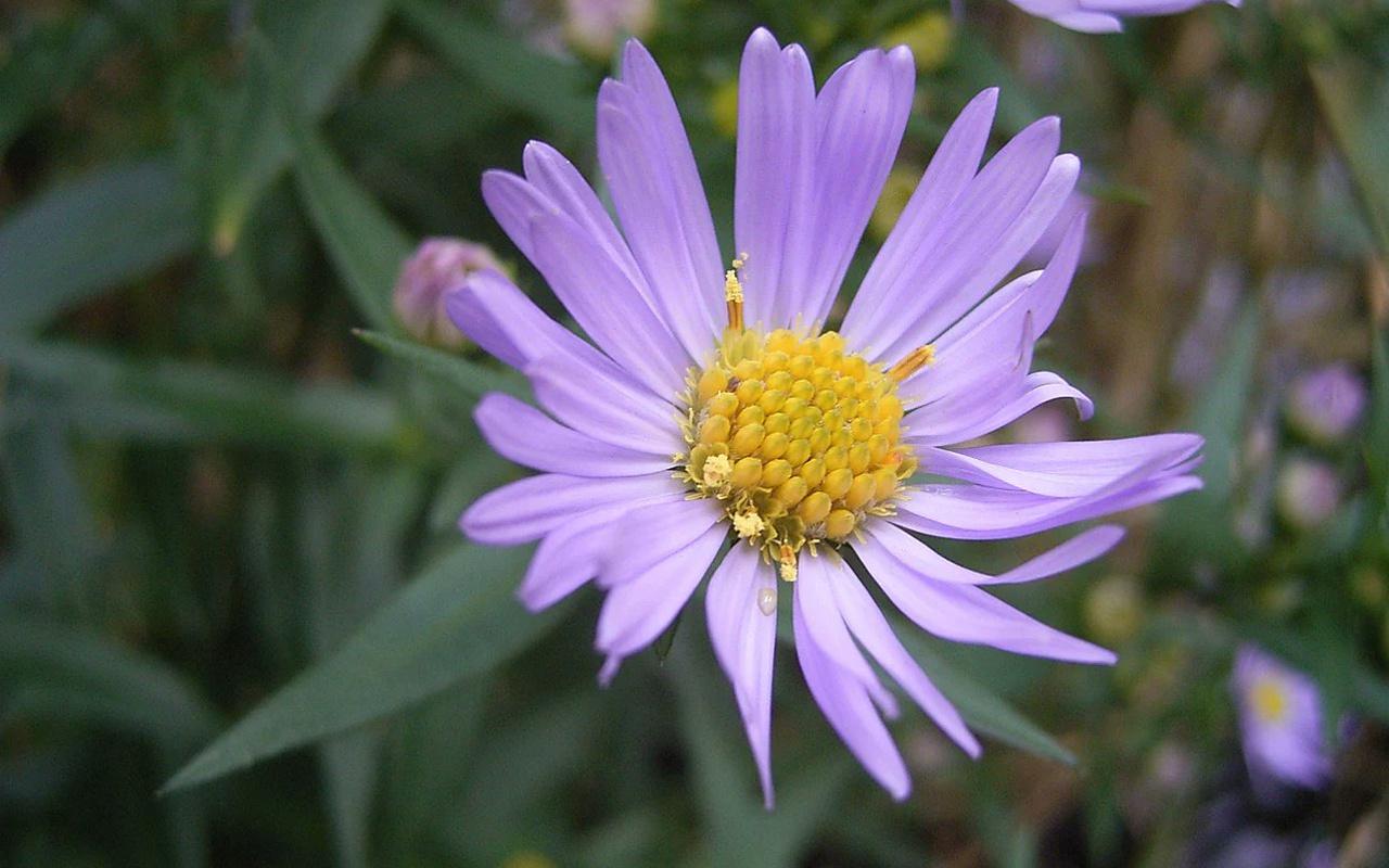 Bu çiçek her gün 100 milyon kez tıklanıyor! Gizemi çözüldü