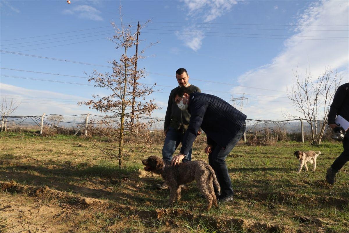 Köpeklerle Muğla'da aranıyor yurt dışına satılacak yüksek gelir getiriyor