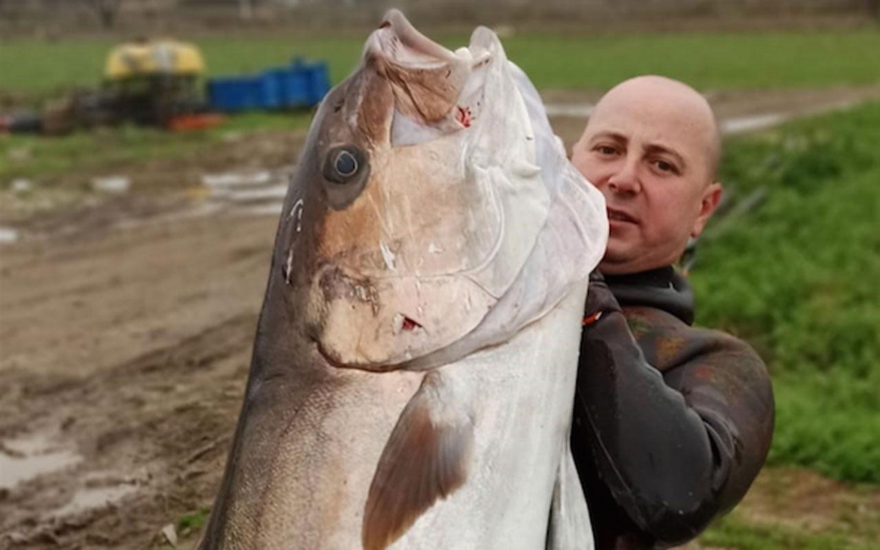 Çanakkale'de tüpsüz dalışta zıpkınla boyu kadar balık avladı