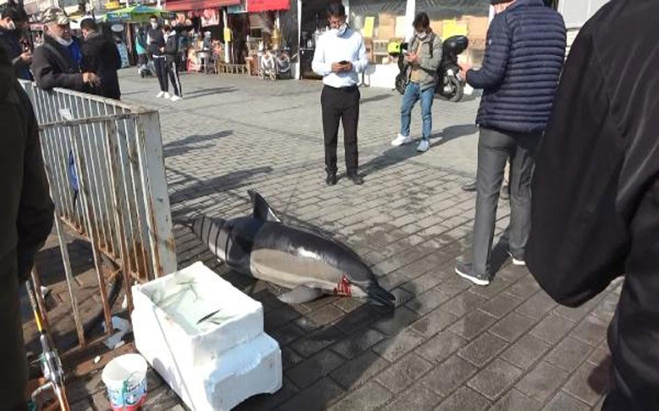 Karaköy İskelesi'nde ölü yunus bulundu