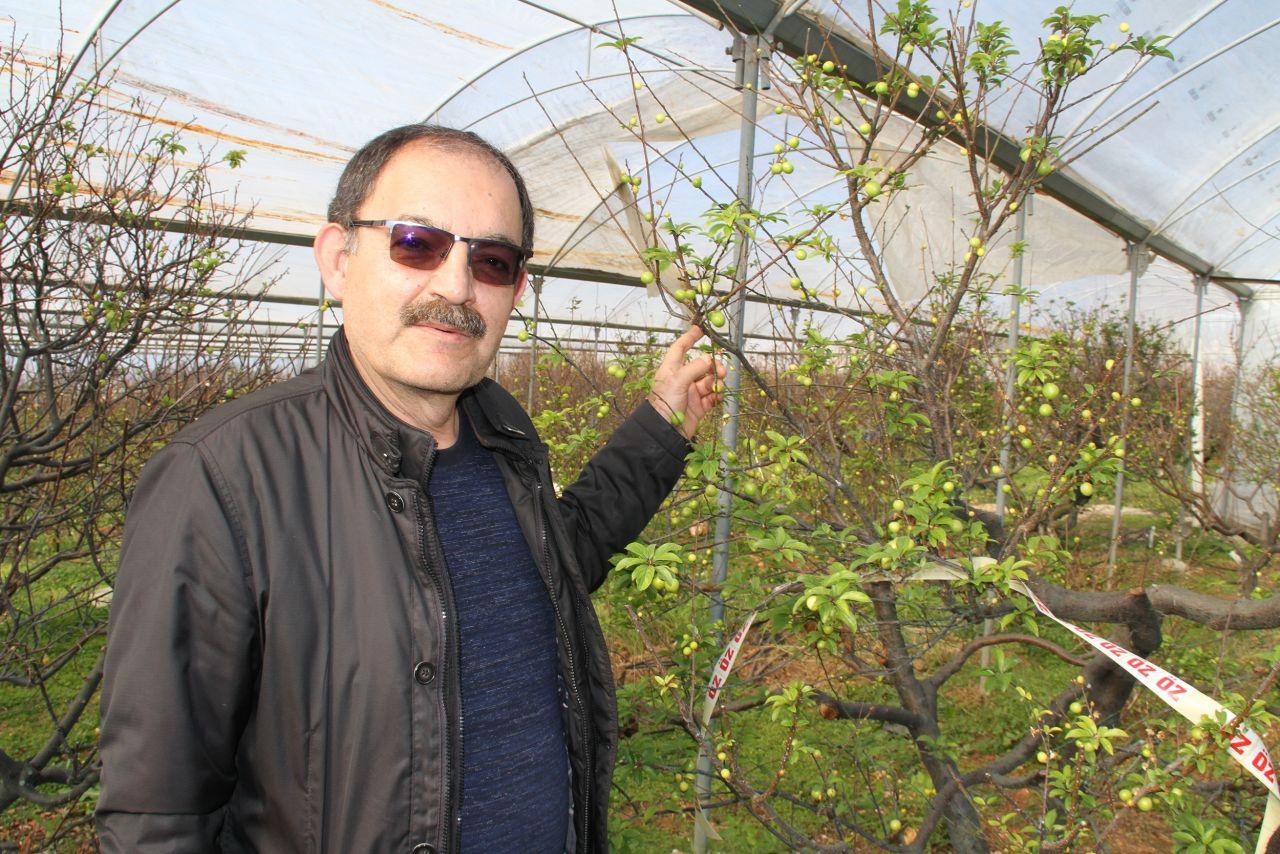Kilosu 500 lira havalar sıcak gidince Mersin'de hasat erken başladı