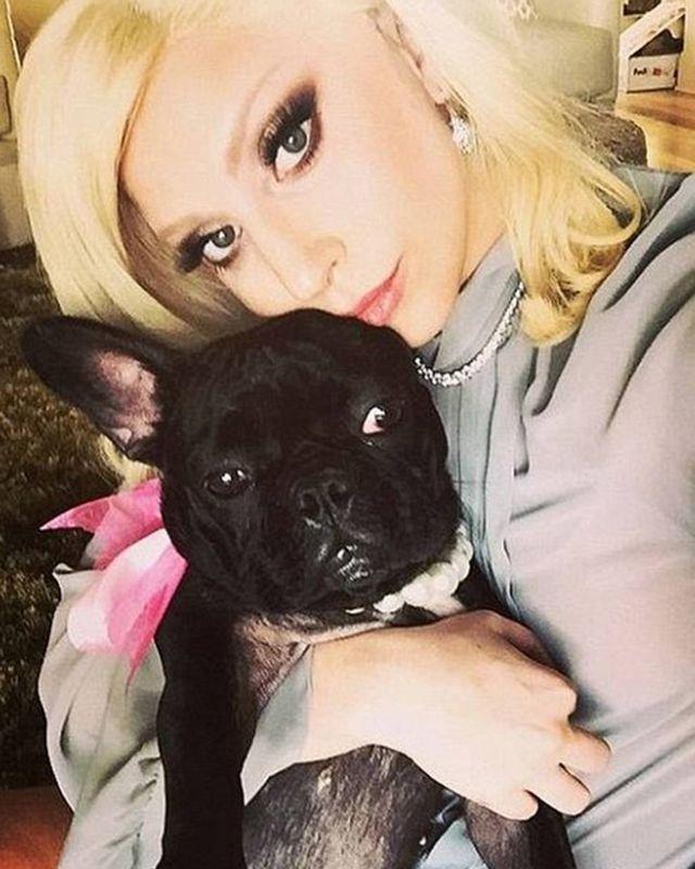 Lady Gaga'nın silahlı saldırı sonrası köpekleri çalındı