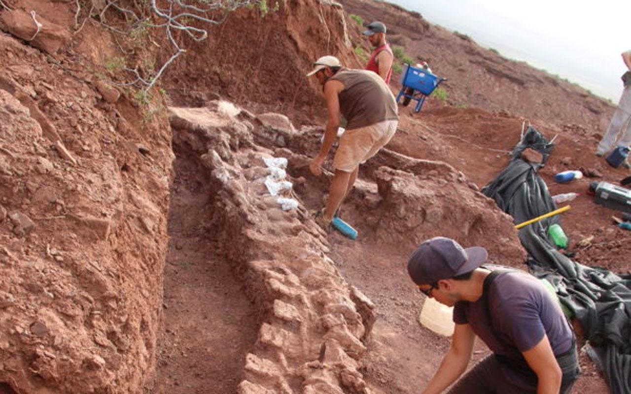 Arjantin'de en eski dinozor topluluğuna ait fosiller bulundu