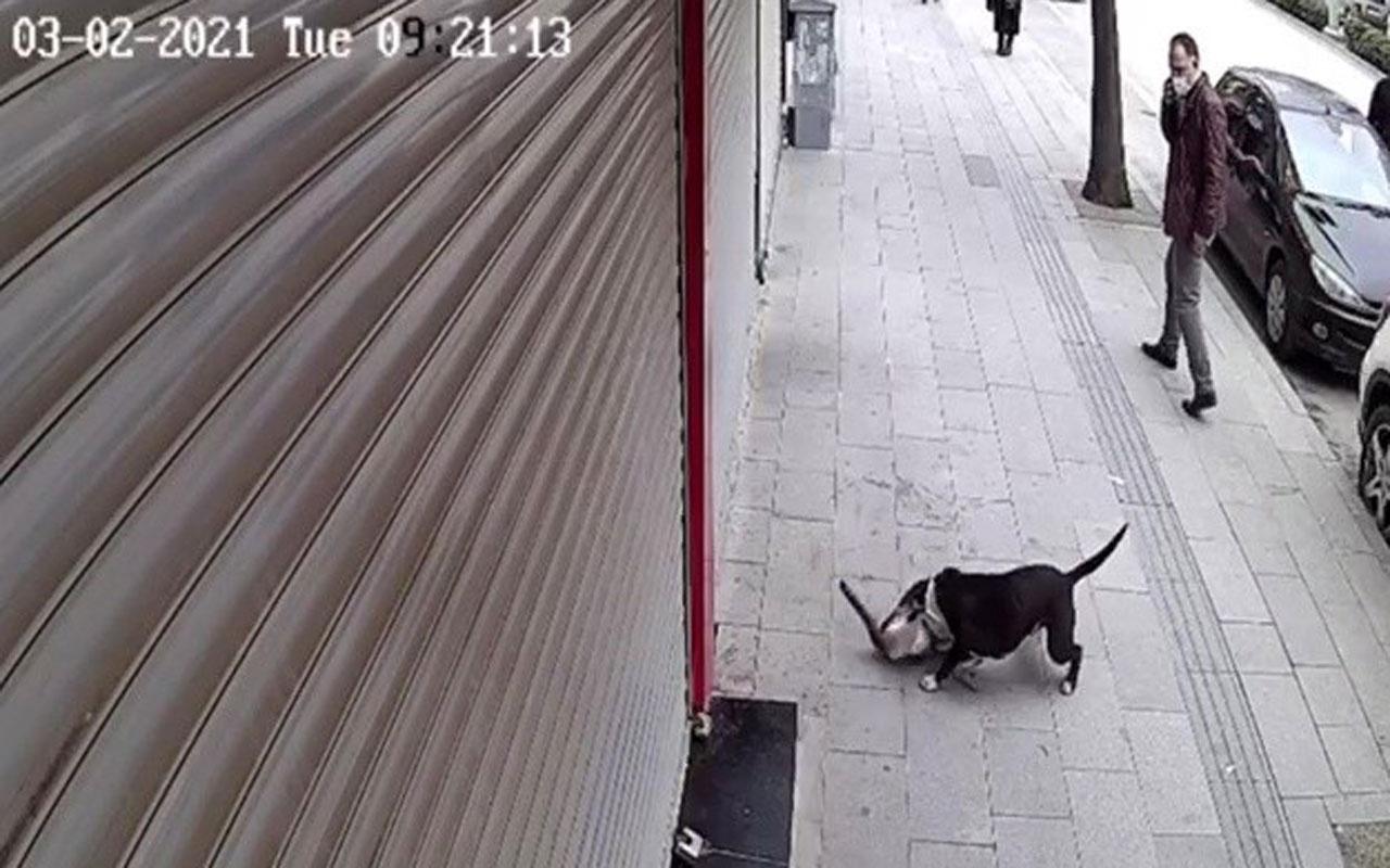 Hatay'da pitbull dehşeti kediyi telef etti