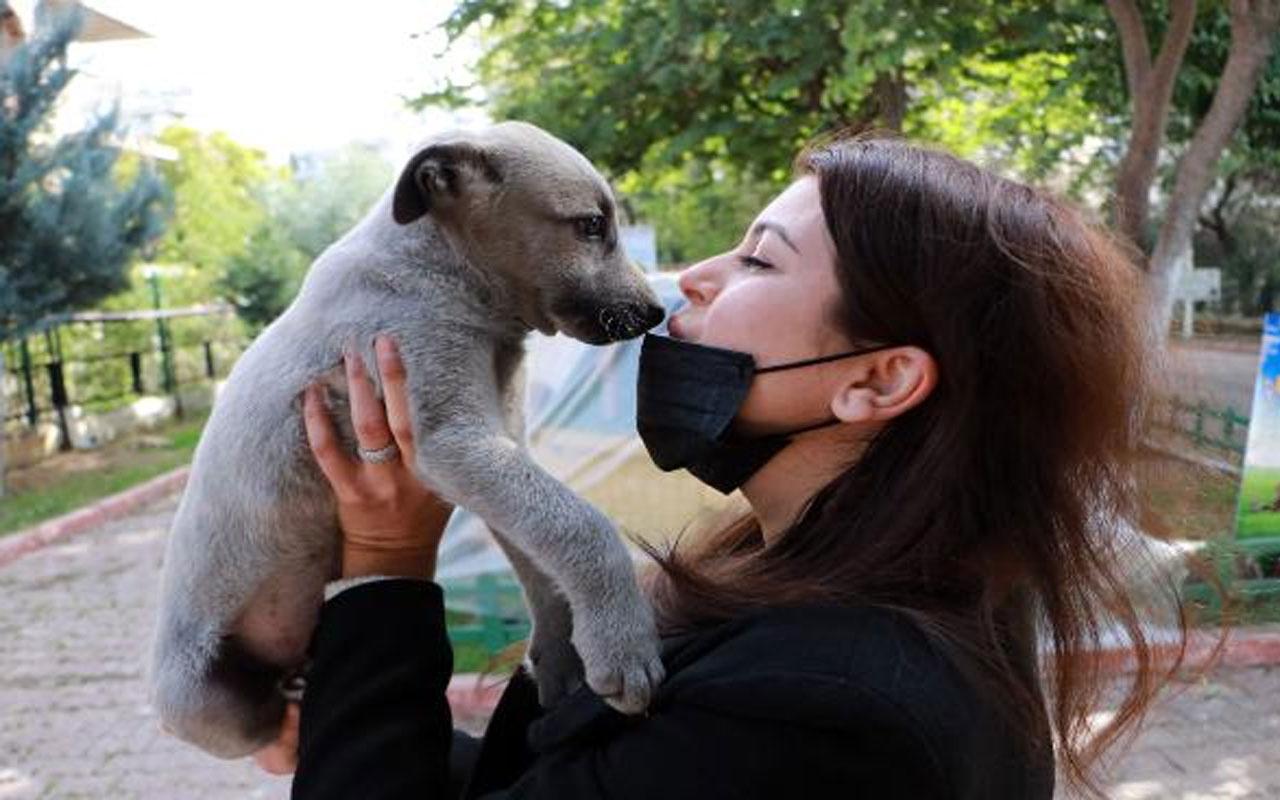 Koronavirüste mutant uyarısı: İnsandan hayvana bulaşmayacağının garantisi yok