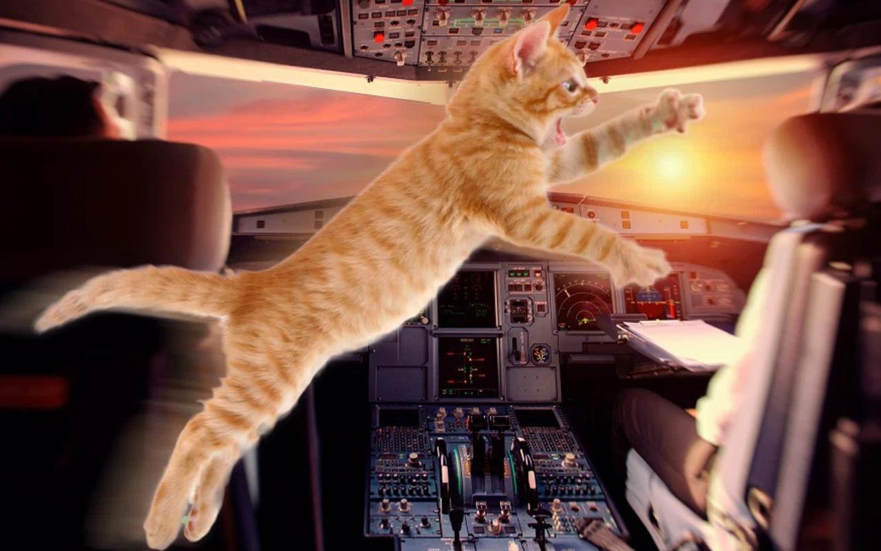 Pilot havada neye uğradığını şaşırdı! Kedi saldırısına uğradı