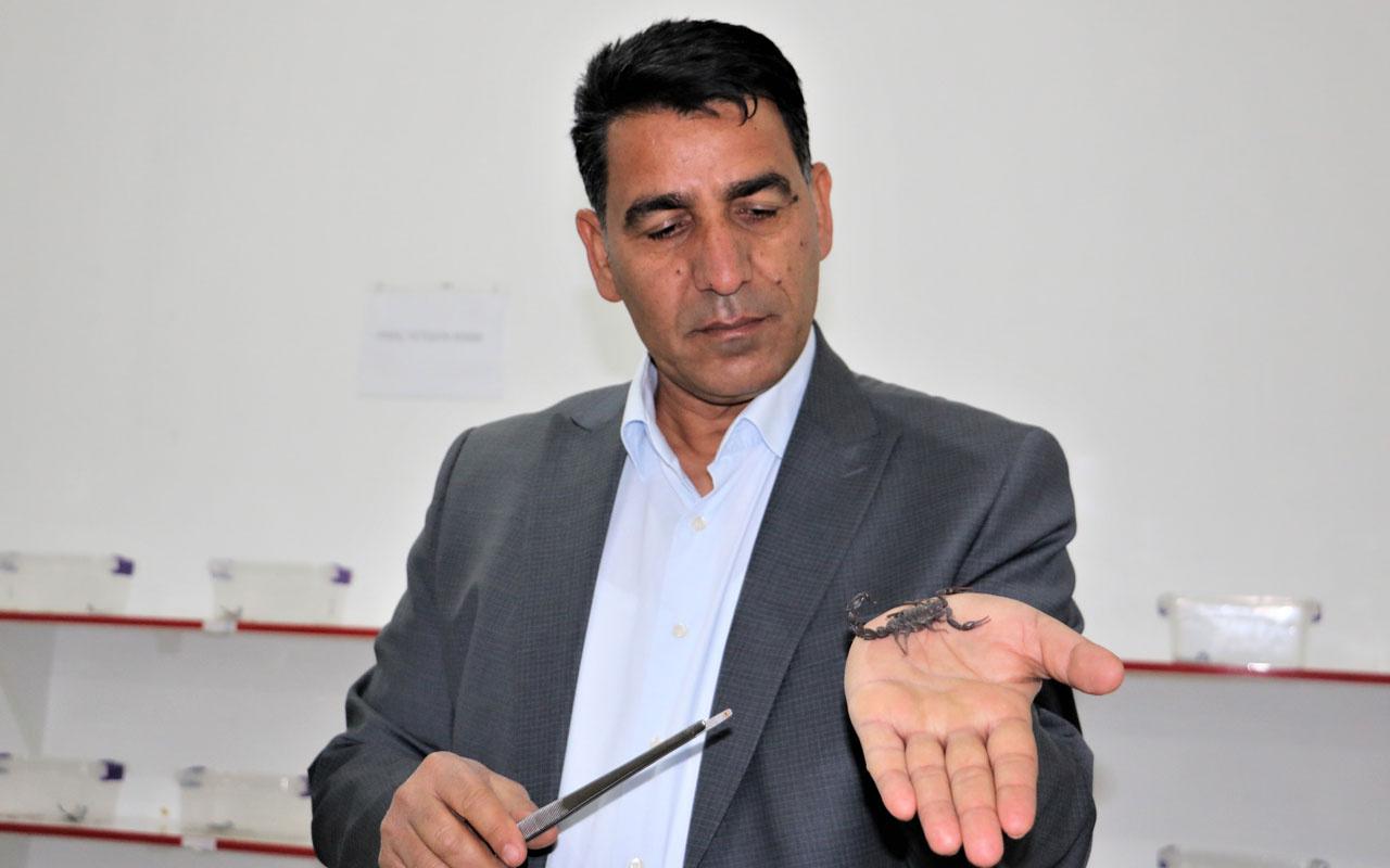 Şanlıurfalı 'Akrep Ali' 10 yaşından beri kara akreplerle yaşıyor
