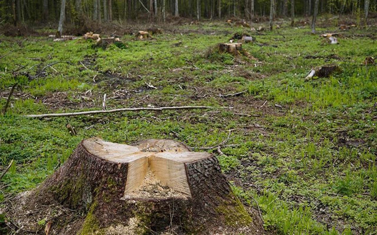 Ordu'da korkunç olay! Üzerine ağaç düşen lise öğrencisi hayatını kaybetti