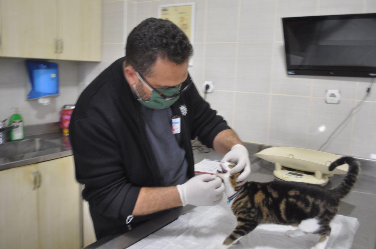 Türkiye'de sadece 2 tane var! Muğla'da gerçek veterinerde ortaya çıktı