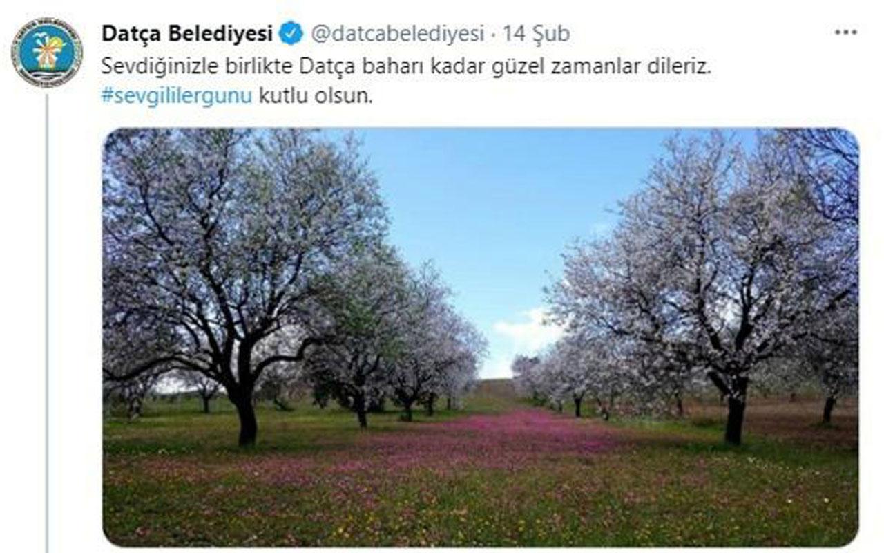 Kız öğrenciler için kullanılacak! Datça Belediyesi Sevgililer Günü tweetini 6 bin dolara sattı