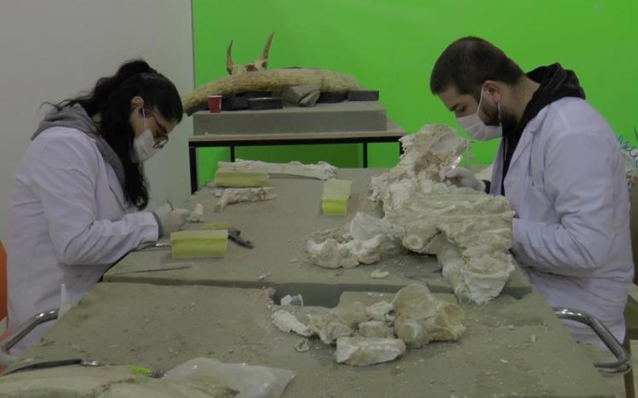 7,5 milyon yıllık! Dünyada eşi benzeri yok Kayseri'de tek parça halinde bulundu!