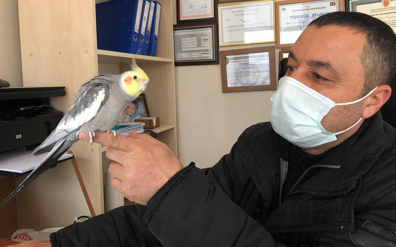 Sakarya'da papağanın söylediği şarkıyı duyanlar inanamadı