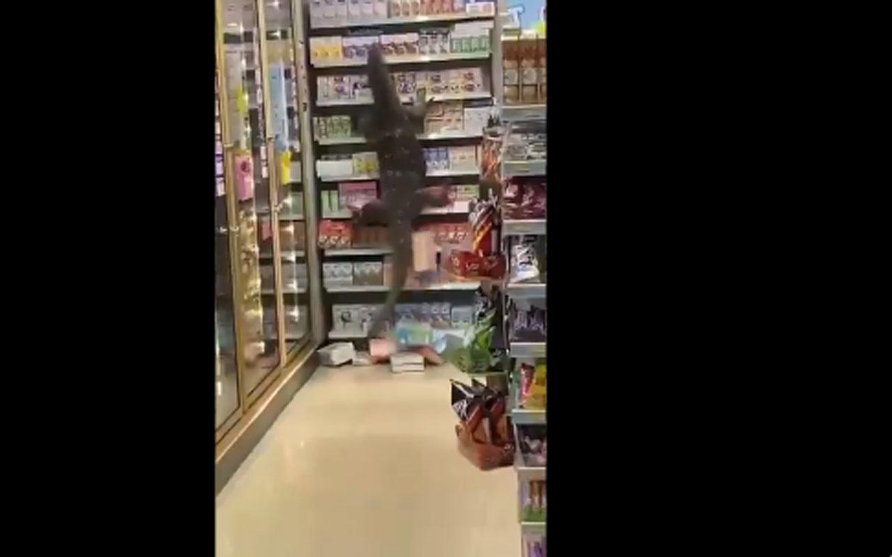 Komodor ejderi markete daldı müşteriler dondu kaldı o anlar kamerada