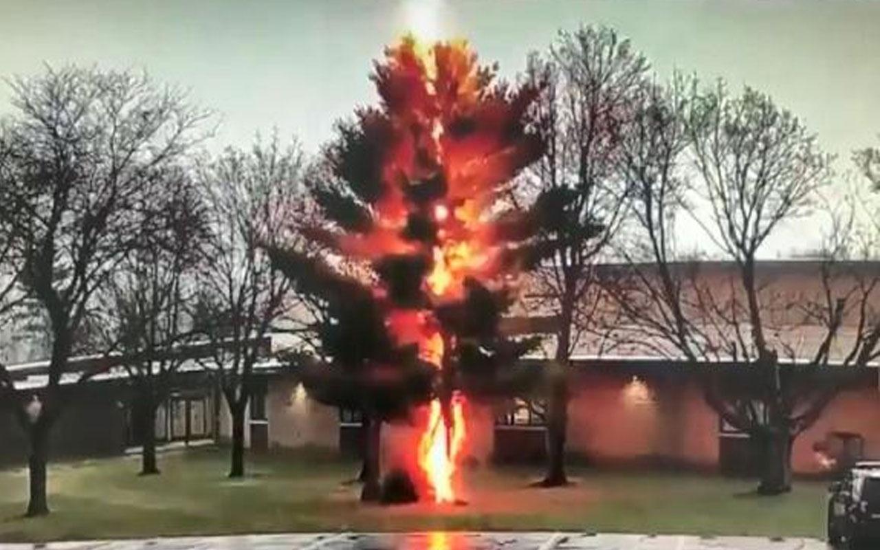 ABD'de korku dolu anlar! Okul bahçesinde yıldırım düşen ağaç ikiye ayrıldı