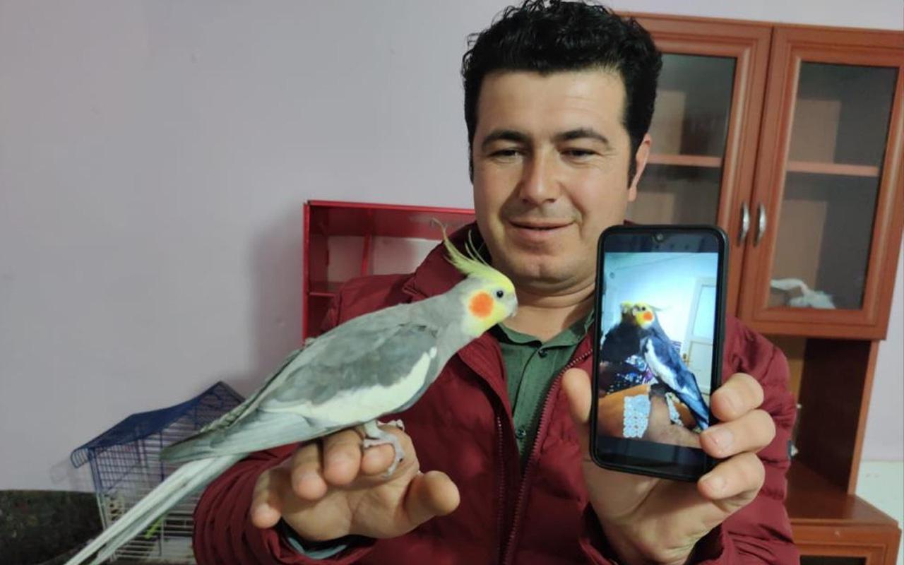 Amasya'da papağan ıslıkla Ölürüm Türkiye'm parçasını söylüyor ilgi odağı oldu