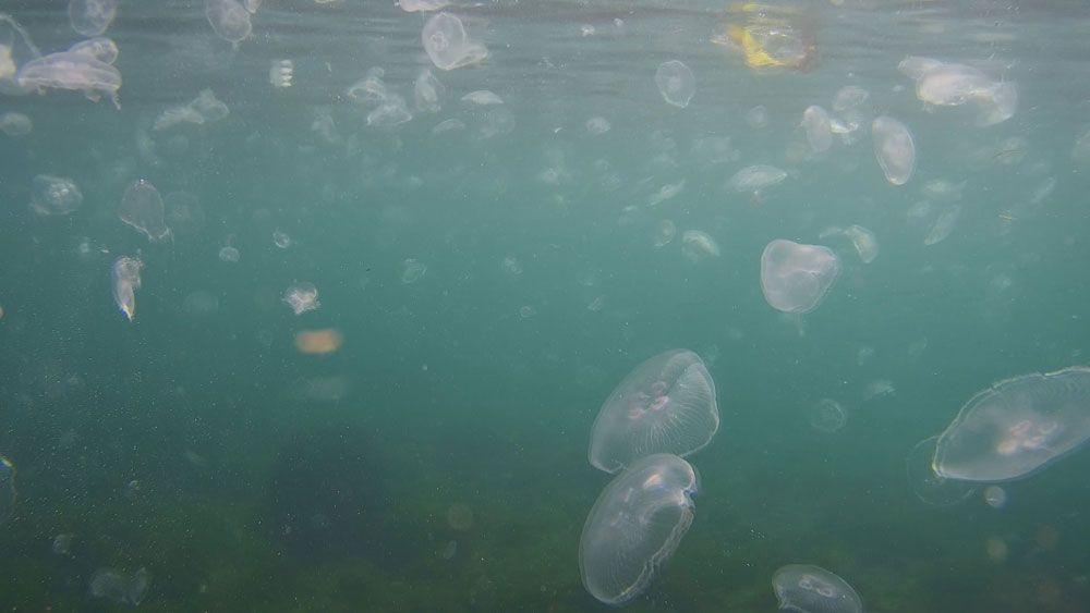 Korkutan görüntü! İstanbul Boğazı'nda denizanası istilası