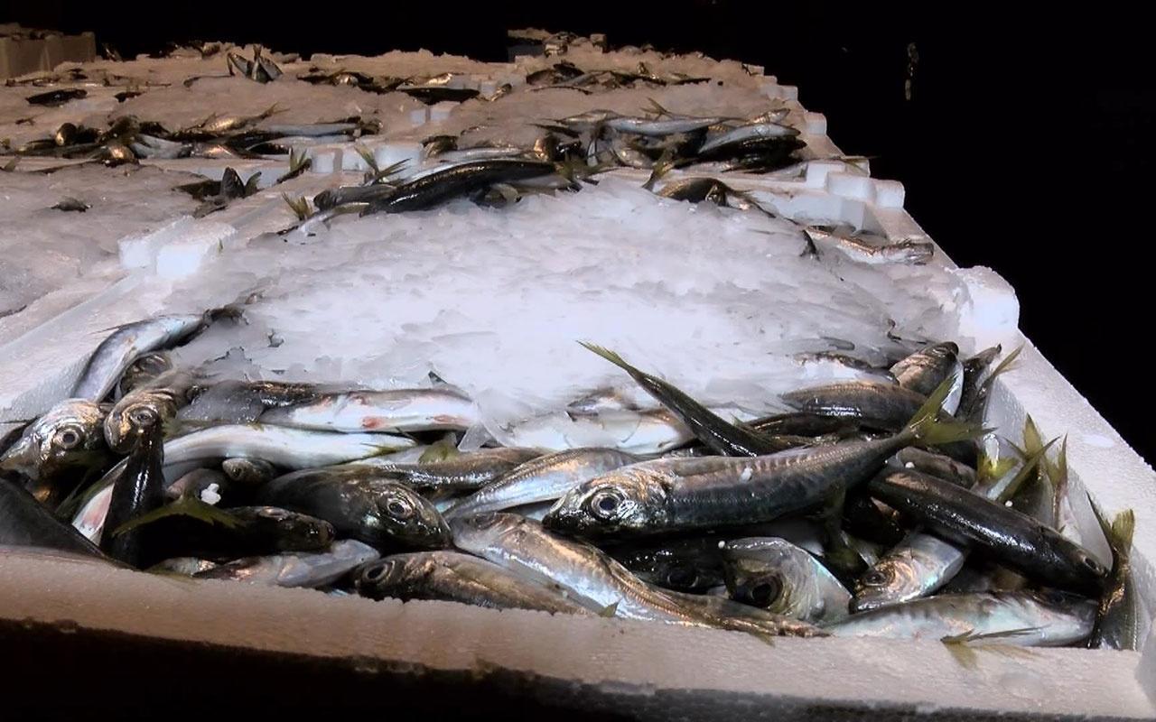Balık sezonu kapandı! Sezonun son balıkları hallere geldi 11 milyon lira ceza yazıldı