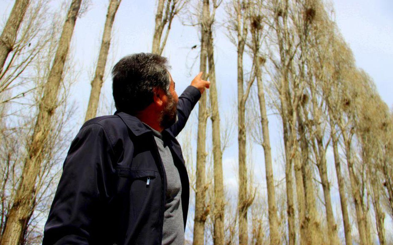 Erzurum'da istilacı karga çilesi! Köylüler toprağa koyuyor kargalar çıkartıyor