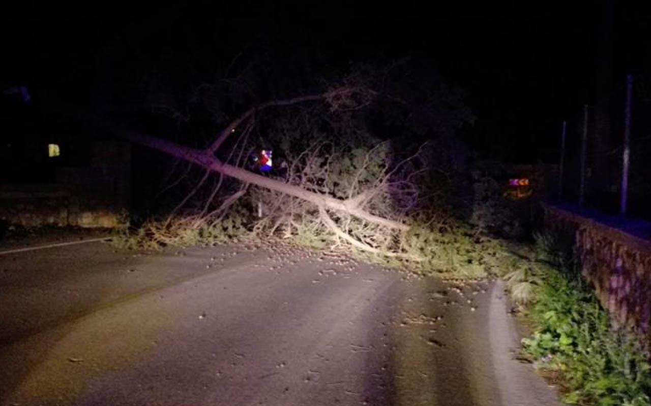 Muğla Bodrum ilçesi ile Denizli'de fırtına! Ağaçlar devrildi otomobiller zarar gördü
