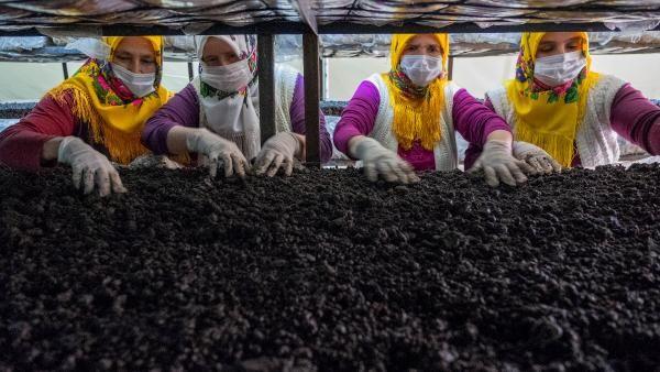 Aylık 40 bin TL gelir! Konya'da tonlarca ürettiler mahalle sabırsızlıkla bekliyorlar