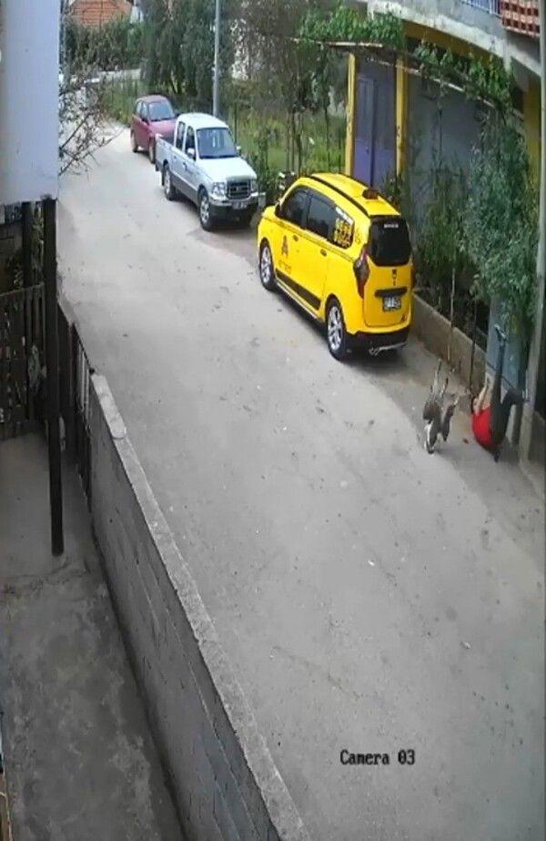 Antalya'da 'hayatım gözümün önünden geçti' deyip anlattı: Köpek yerine 3 bin TL'ye bunu alın