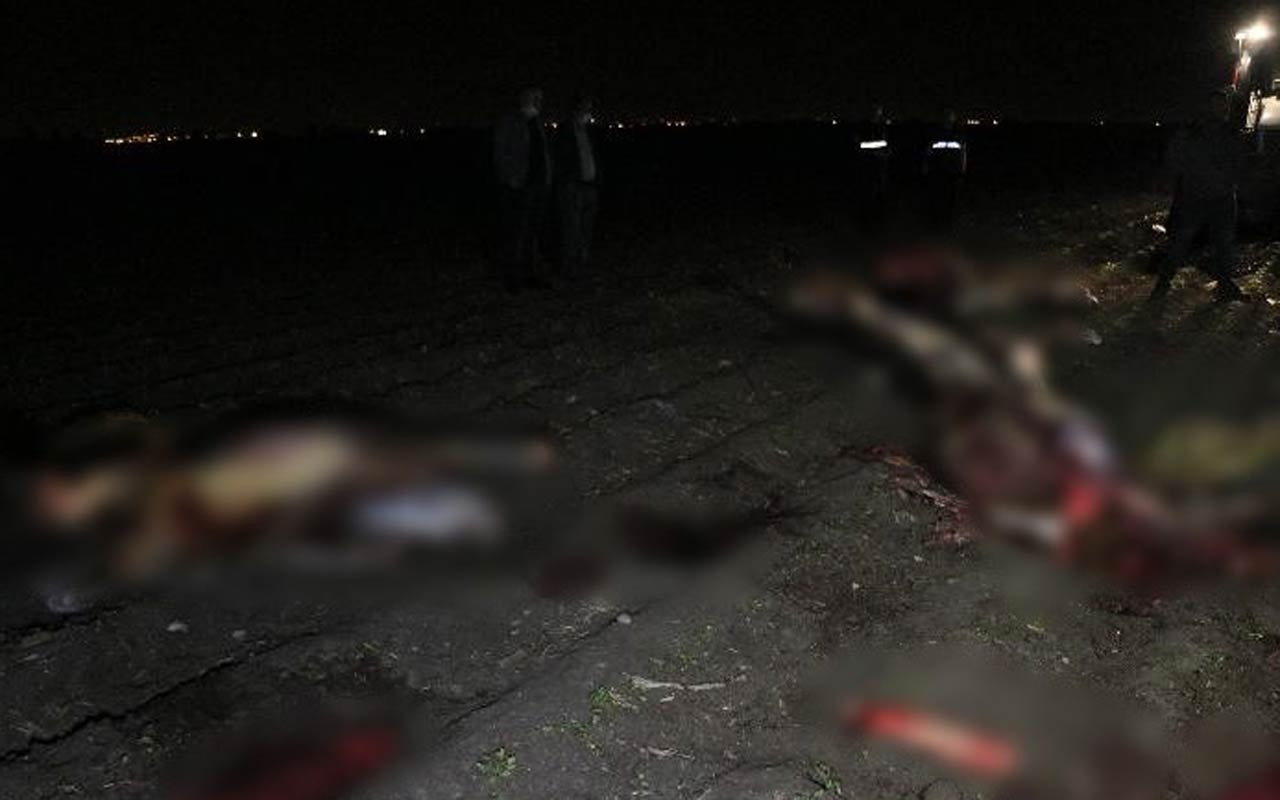 Adana'da polis ekipleri ihbar üzerine gitti korkunç manzarayla karşılaştı kesip parçalamışlar
