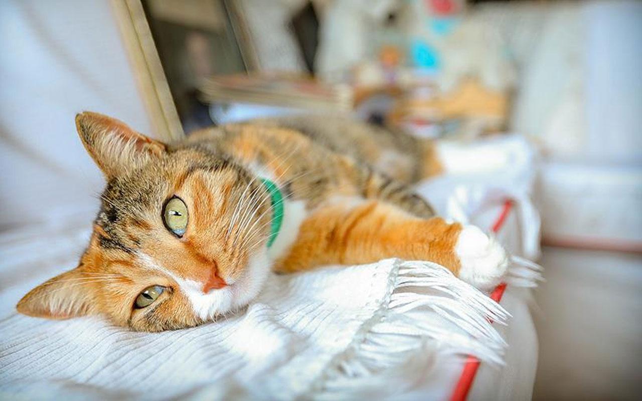 İlk kez tespit edildi! Bir kedi Covid-19 sebebiyle hayatını kaybetti