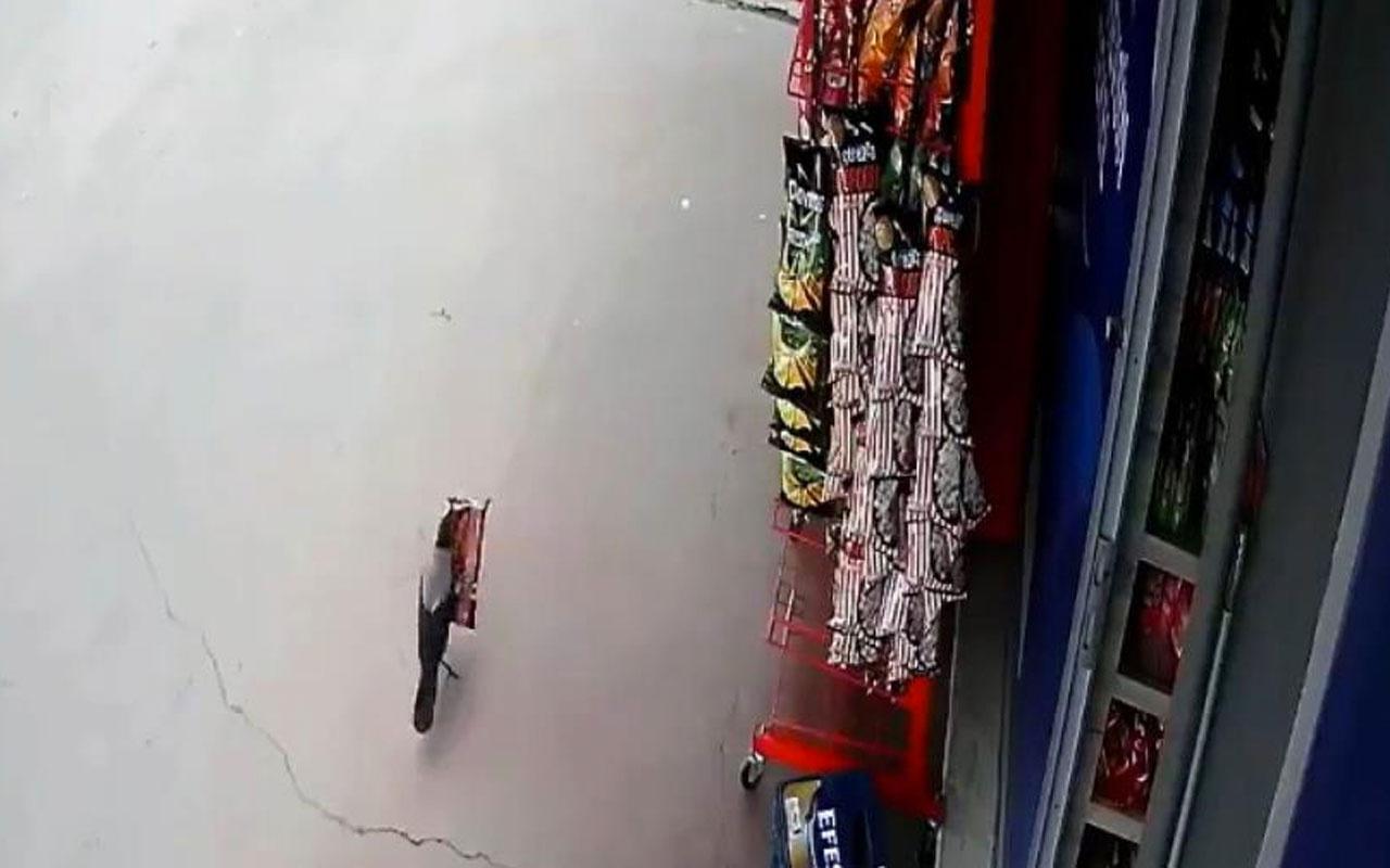 Pendik'te 'cips hırsızı' karga iş yeri sahibine yakalandı o anlar kamerada
