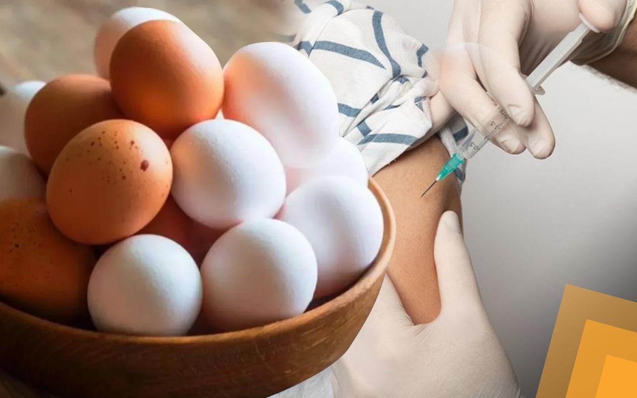 Kampanya yapıldı! Aşı olana 10 adet bedava yumurta verilecek