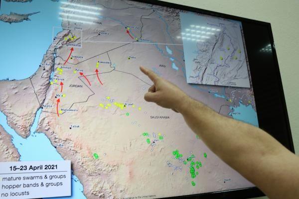 İstilacı çöl çekirgesi uyarısı: Türkiye'ye gelme olasılıkları var