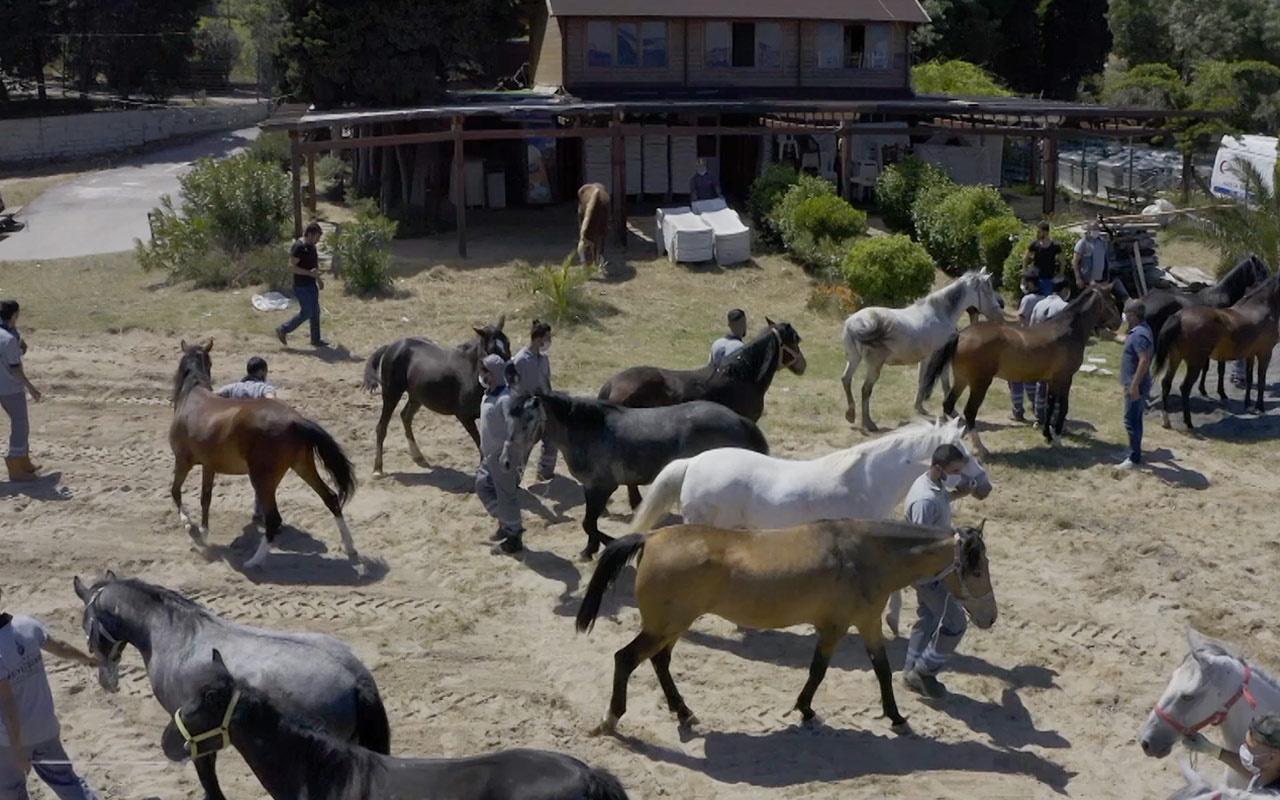 İBB'den Adalar'ın atlarıyla ilgili açıklama: 224 at öldü