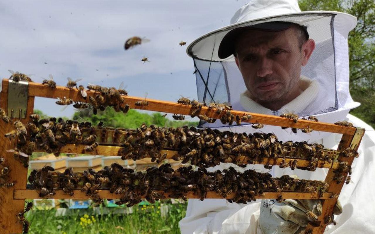 Bursa'da 3 aile gram gram sağıyor fiyatı dudak uçuklatan arı sütü yok satıyor!