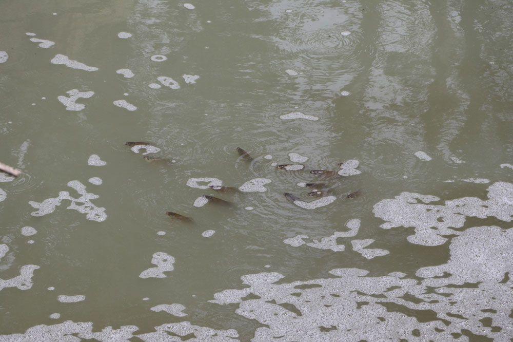 Tekirdağ'da tedirgin eden balık ölümleri! Muhtar isyan etti