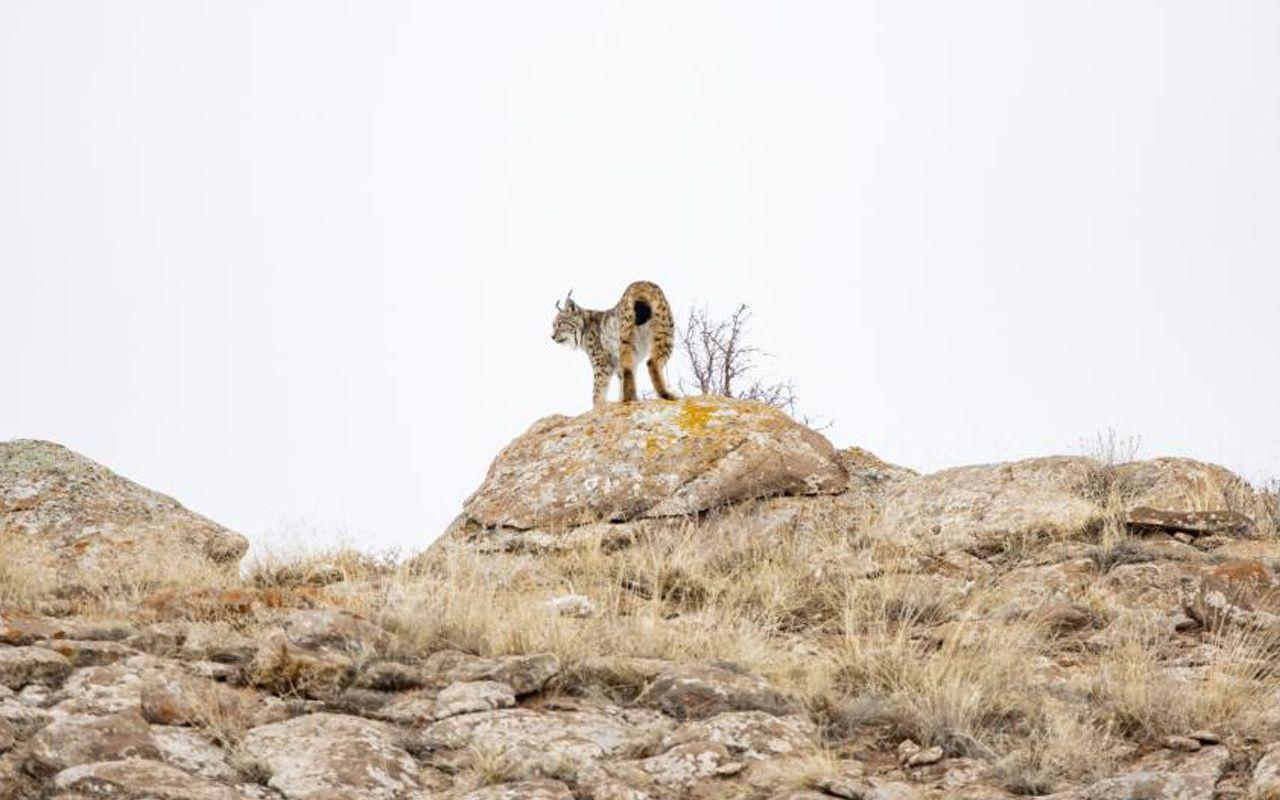Sivas'ta 'Orman hayaleti' var! 80 gün dedektif gibi iz sürüp görüntüledi