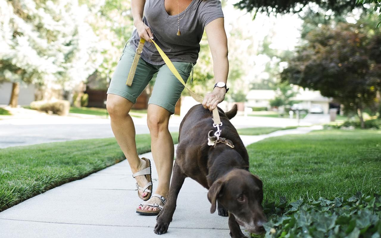 ABD'de köpeklerini gezdiren kadının akıbeti korkunç! Ayı yedi