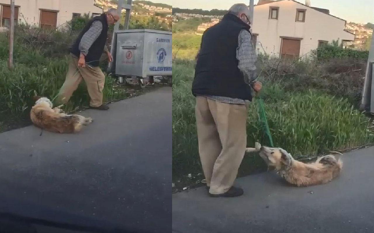 Sarıyer'de köpeğini silahla vurarak öldürdüğü iddia edilen kişi gözaltına alındı