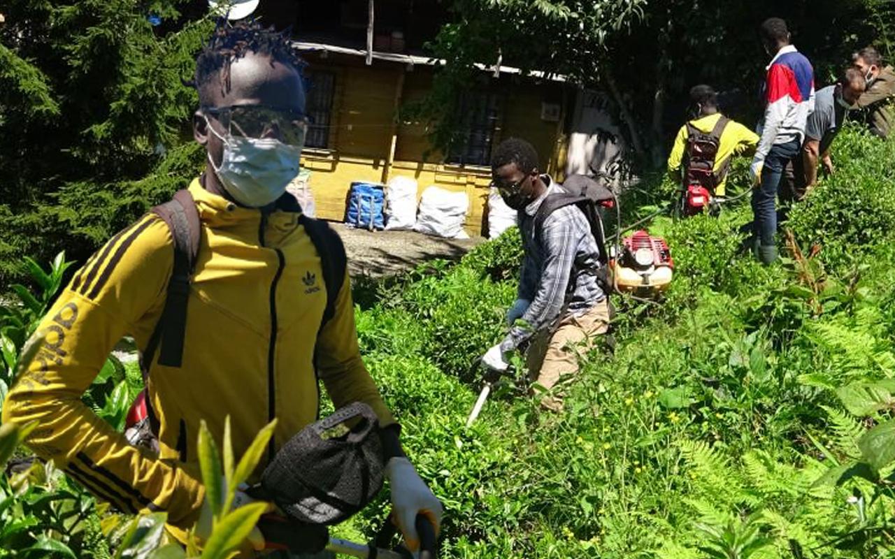 Gambiyalı çay işçileri bu sezon da Rize'de iş başında