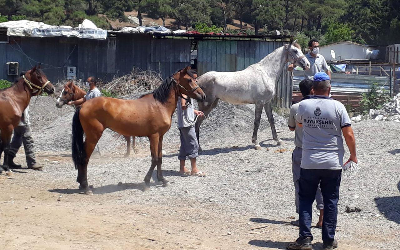 İBB'den kayıp atlarla ilgili açıklama: Sorumluluk bakanlıkta