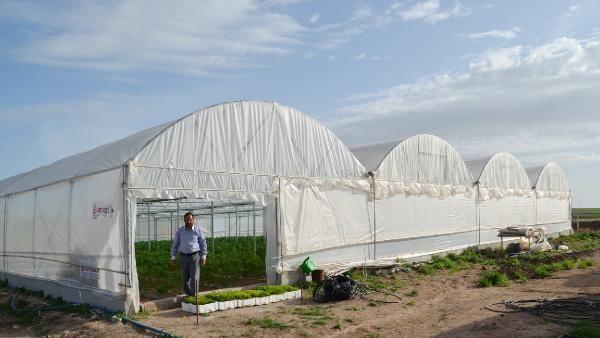 Anadolu'nun bozkırında kurduğu serada yılda 3 kez hasat yapıyor! Paraya para demiyor
