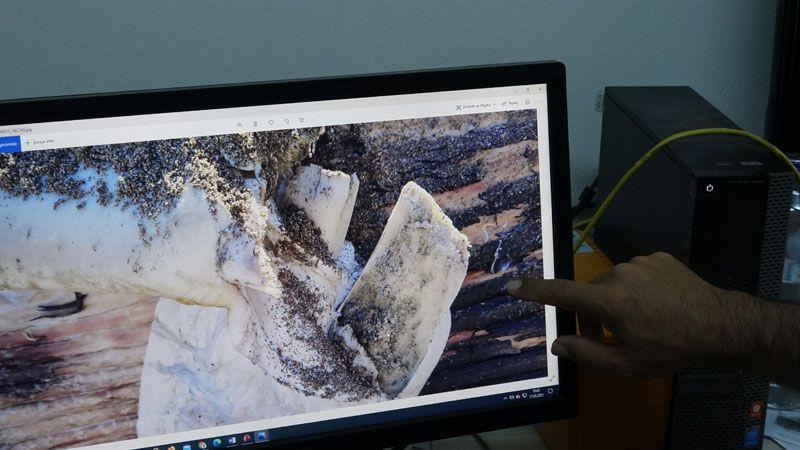 Mersin'de sahile vuran dev balinanın ölüm nedeni belli oldu otopsi sonuçları açıklandı