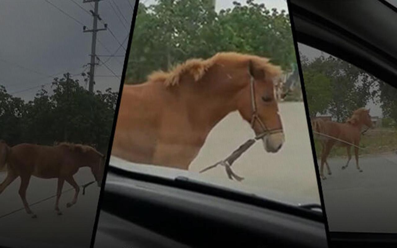 Bursa'da sürücülere zor onlar yaşatan başıboş at trafiği altüst etti