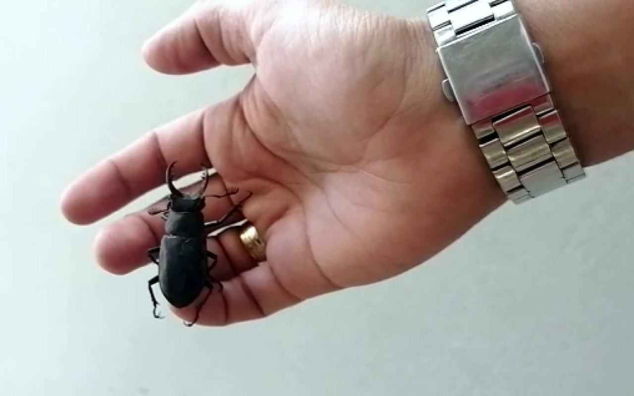 Muğla'da dükkanın önünde buldu! İnternette bakınca şaşkına döndü